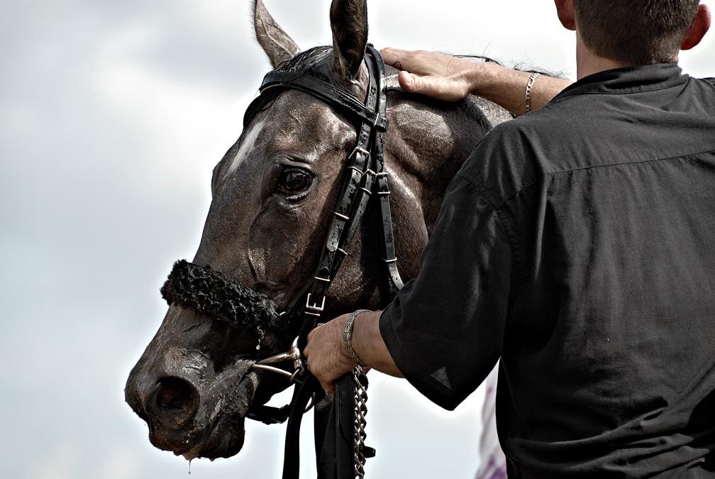 Sweating horse