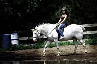 Sulking horse
