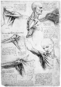 Leonardo Da Vinci's Studies of the Shoulder